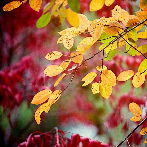 https://www.etsy.com/listing/206967929/colorful-autumn-photograph-deep-red?ref=shop_home_active_4