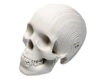 Micro Vince - Cardboard Human Skull - White