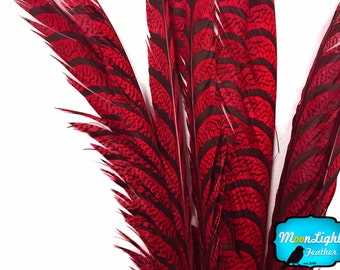 "Super Long Feathers, 5 Pieces - 30-35"" RED ZEBRA Lady Amherst Pheasant Tail Super Long Feathers : 3632"