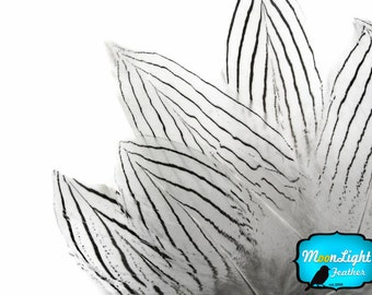 Wholesale Feathers, 1/4 lb - NATURAL Silver Pheasant Plumage Wholesale Feathers (Bulk) : 3677