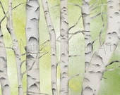 8 x 10 Birch Tree Wall Art Print, Gray and White Home Decor, Lime Green and Yellow Wall Decor (359)