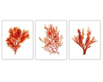 Set of Three Red Seaweed Prints, Large Red Coral Artwork, 11x14, 16x20, 20x24
