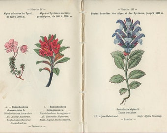 1898, Dragon's Head, Bearberry, Alpine Rhododendron, Alpine Skullcap, French Botanical Book Plate, 97-114, 98-113, Henry Correvon