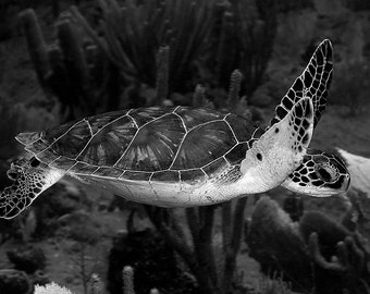 Sea Turtle Decor | Sea Turtle Art Underwater Photography print in Black & White