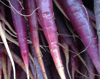 Carrot, Cosmic Purple Carrot Seeds | Gorgeous Purple Carrots with Orange Centers
