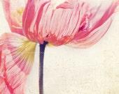 poppy print, flower photograph, entryway decor, pink fuchsia magenta, red, nature photo, photography, little girls room decor, spring art