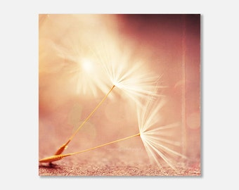 photography canvas wrap, dandelion photograph, My Wish for You, nature photo magic wand peach pink apricot golden champagne coral baby room