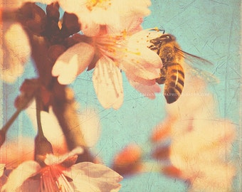 bee print, kids room wall art, blue decor, cherry blossom print, nature photography, spring decor, gardeners gift, botanical art, 12x12 8x8