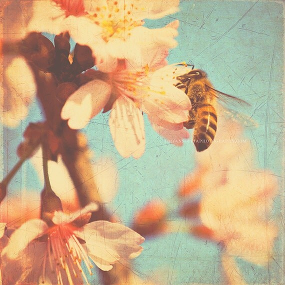 bee print, kids room wall art, blue decor, cherry blossom print, nature photography, spring decor, gardeners gift, botanical art, 12x12 8x8