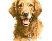 Close Out Golden Retriever Dog Image Womens White T Shirt Free shipping to USA