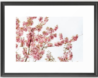 Art, Cherry Blossoms, Pink, Whtie, Botanical, fPOE, Fine Art (6 Sizes) Unframed/Framed, Unmatted/Double Matted, fPOE, 23x27, 27x37