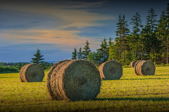 Harvest Field with Hay Bales at Sunset on Prince Edward Island in Canada No.153 - A Fine Art Farm Landscape Photograph
