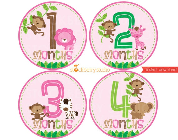 safari baby girl monthly stickers pink baby girl month stickers