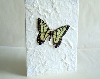 Butter Fly Notecards 6 pack