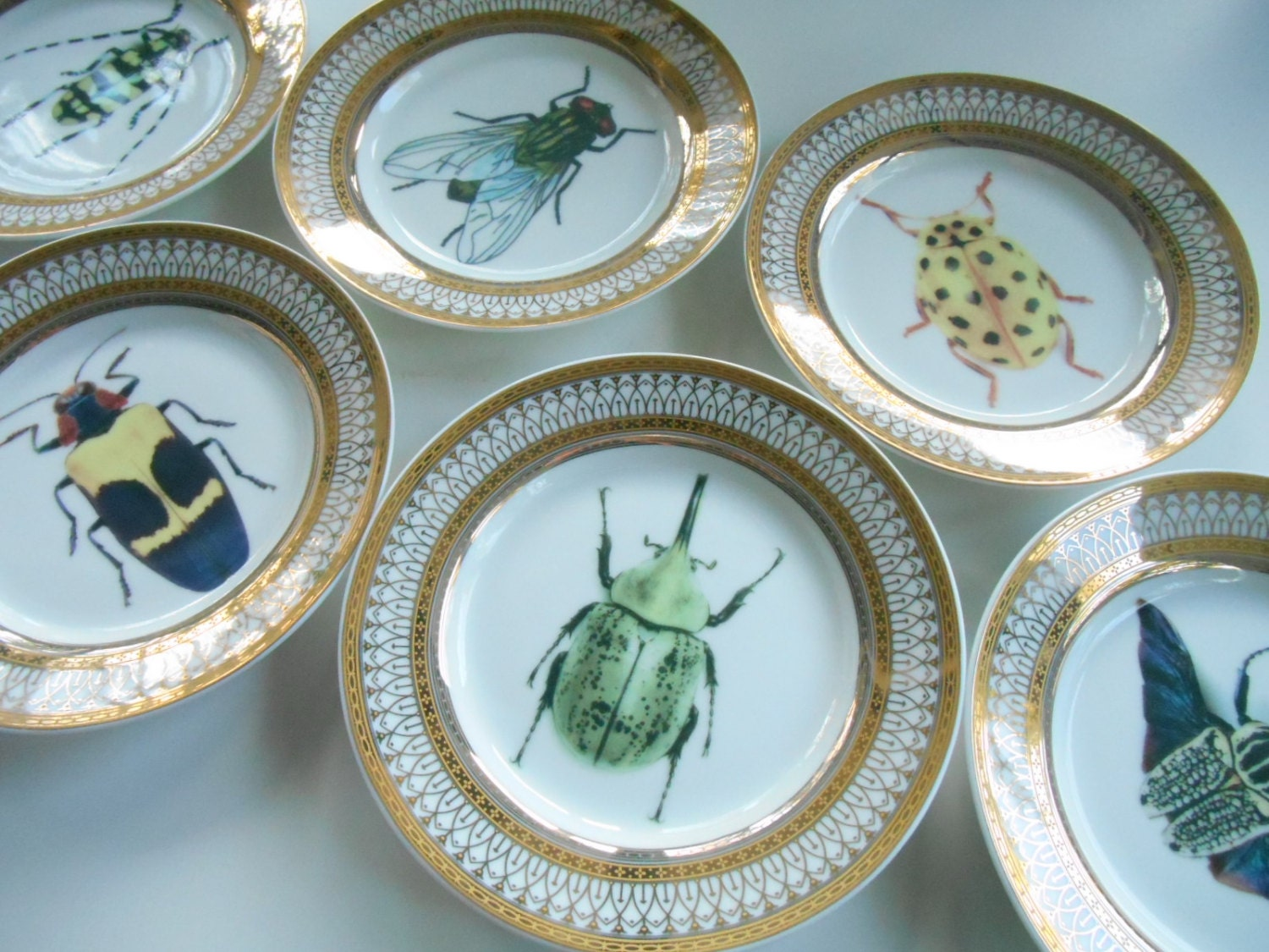 6 Gold Porcelain Bug/Insect Dessert Plates 6\  Beautiful Entomology Dinnerware & 6 Gold Porcelain Bug/Insect Dessert Plates 6\