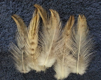 Cruelty Free Feathers - Natural Buckskin Gold and Ivory  Hackle - Lot of 25