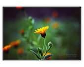 Floral Photography. Orange Flower. Floral art. Green. Blue. Orange. Spring. Colorful. Bright. Nature. Home decor
