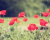 Poppy Wall Art Poppy Photography Red Poppies Floral Wall Art Red and Green Art Flower Photography Flower Print Picture of Poppies 8x10 Print