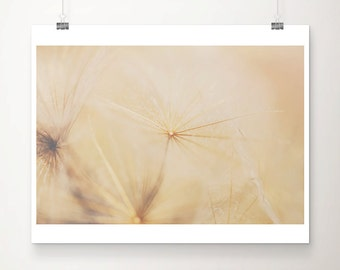 gold dandelion photograph gold dandelion print gold flower photograph gold flower print botanical print summer photograph