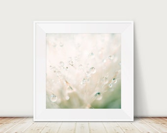 dandelion photograph dandelion print rain photograph nature photography macro photography dandelion art abstract art surreal print