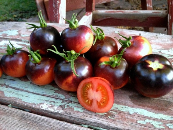 Indigo Rose Tomato Seeds Purple Open Pollinated Short Indeterminate High Antioxidant Variety Excellent Sweet Flavor Rare Seeds