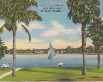 Florida, Lake, Palm Trees - Linen Postcard - Unused (EEE)