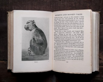 Vintage 1920s book stories about animals by Lilian Gask - The Hundred Best Animals
