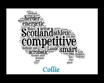 Collie, Collie Art, Collie Artwork, Collie Print, Collie Lover, Collie Gift