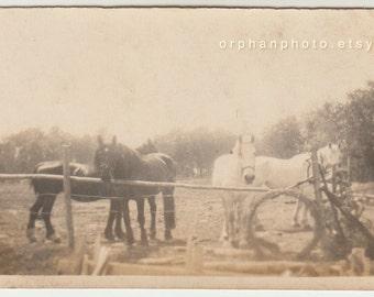 Vintage/Antique beautiful photo of four horses