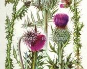 Vintage Botanical Print Antique FLOWERS, plant print botanical print, bookplate 151 art print, purple plants plant wall