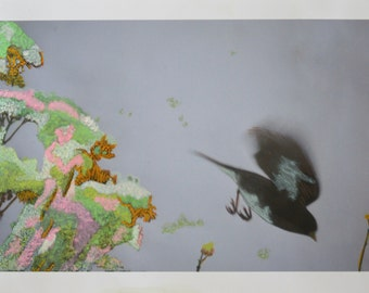 Arrivals and Departures - Hand Tinted Prints of  Black and White Bird Photos