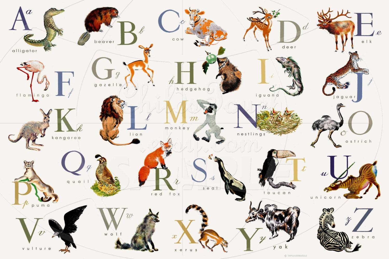 Grou00dfe Gru00f6u00dfe Tier Englisch oder Franzu00f6sisch Alphabet