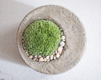 moss concrete planter