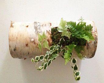 birch log planter