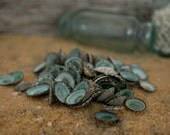 Beach Decor Seashells - Turquoise Shells 20 pcs - Small Limpet Shells for Nautical Decor, Beach Weddings or Crafts