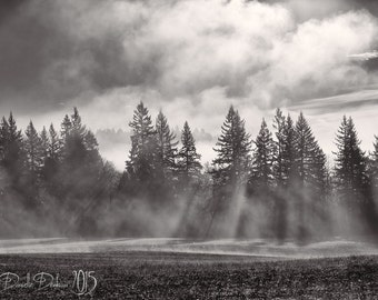 Landscape Photography Oregon | Pine Trees | Sunrise | Foggy Morning | Forest