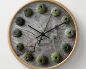 Sea Urchins, photographic clock, driftwood, aqua, seashells, grey, wood, distressed, shabby, rustic, green, spheres, texture, sea, Greece