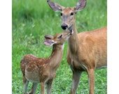 Whitetail Doe and Fawn - Wildlife Photography - Deer Photo  - Child's Room Decor - Nursery Decor - Tan and Green Photograph