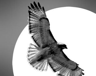 Bird photography I'll Follow the Sun Hawk Flying over the Sun Matted Picture Art Print A668 Grey Gray Black White