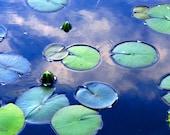 Lily Pond by Catherine Natalia Roché, Spring Flower Photography, Spring Nature Photography, Lily Pad Photography