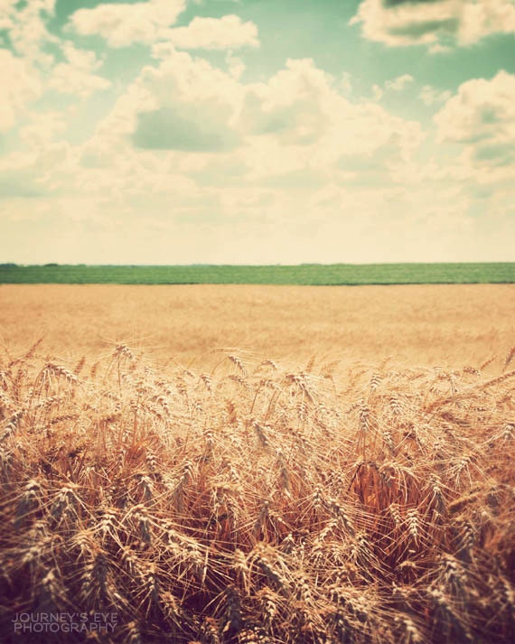 Country photograph, landscape photography, fine art photo, retro photography, Illinois, Midwest art - Fields of Gold