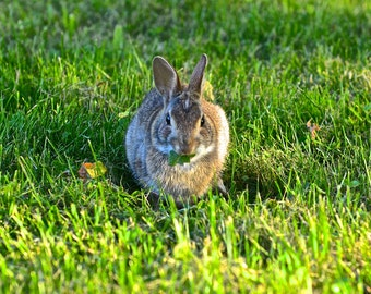 Rabbit in the Grass - Fine Art Photography