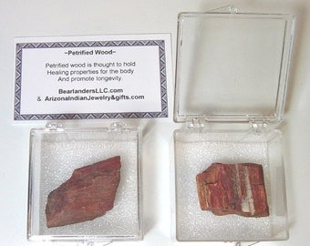 Petrified Wood Collectable From Petrified Forest Arizona