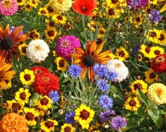 Wildflower Seeds, Easy to Grow Flowers, Childrens Garden Mix, Easy to Care For, Early Bloom, 11 Different Types of Annual Flowers, 100 Seeds