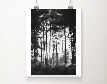 tree photograph black and white photography woodland photograph abstract art tree print woodland decor forest photograph leaf print
