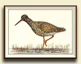 PRINT-Common redshank - sandpiper bird painting artwork print lover - Art Print by Juan Bosco