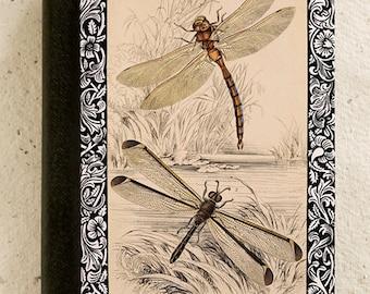 iPad - iPad Air - iPad Mini - Case - Dragonfly - Vintage -  Drawing - Illustration