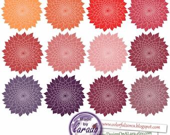 Premium Dahlia Flowers cliparts, chrysanths, mum flower, flower cliparts, Dahlia Clipart in Pink Red and Neutrals, Floral Clipart