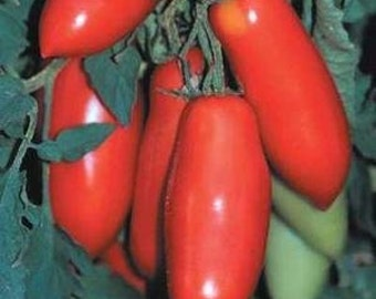 San Marzano  heirloom tomato seeds