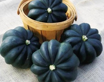 35 Heirloom Acorn Squash Seed - Table Queen, Heirloom Winter Squash, Heirloom Table King Squash, Non-gmo Winter Squash, Non-gmo Acorn Squash